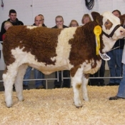 be10_jan_heifer_3rd_joemcgarry