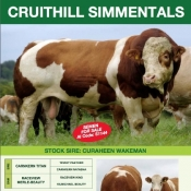 Cruithill Simmentals