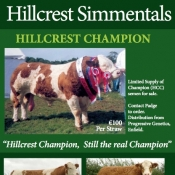 Hillcrest Simmentals