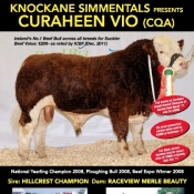 Knockane Simmentals