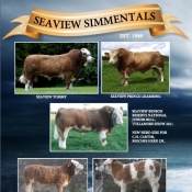 Seaview Simmentals