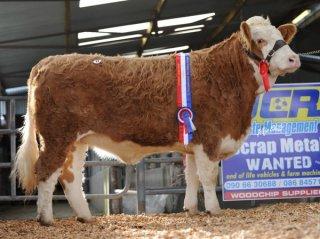 Senior Heifer 'Monaduff Bolonguer 75' €4000