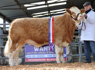 Junior Heifer 'Seepa Cailin' €5000