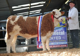 Yearling Champion 'Raceview Cindy Matilda 525 ET' €6100