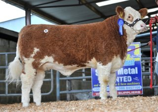 Reserve Yearling 'Clonagh Crystal Klowna' €4000