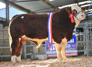 Junior Champion 'Carbery Carribbean' €4800
