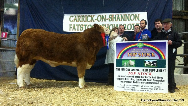 Maiden Heifer Class Winner and Res Champ