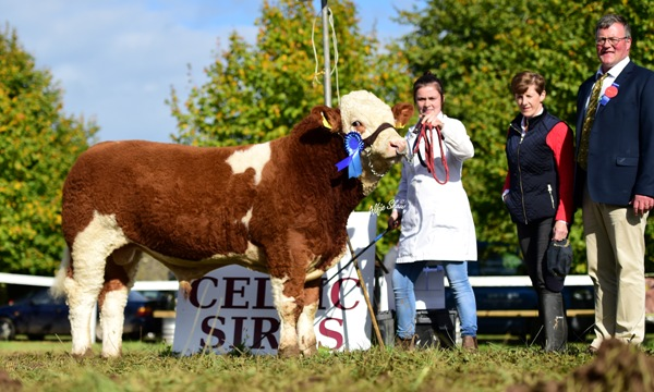 Celtic Sires Senior Bull Reserve 'Broomfield Gerry'