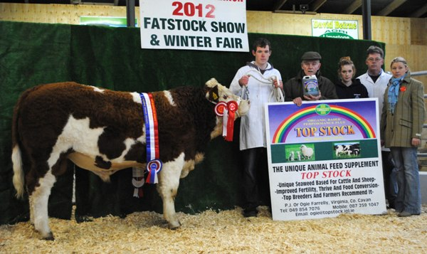 Carrick-On-Shannon Winter Fair 2012 National Weanling Simmental X Bull Calf Champion