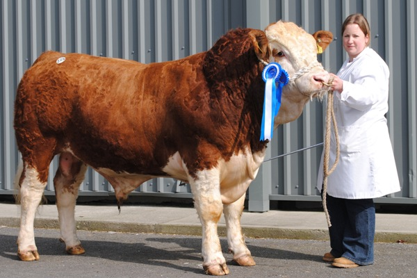 Kilkenny Reserve Champion March 2013