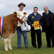 National Yearling Heifer Champion 'Raceview Winty'