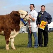 Reserve Plough Bull 'Seaview Wilbur'