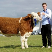 Reserve National Yearling Heifer 'Auroch Witness'