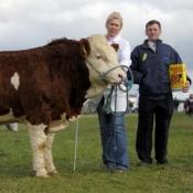 3rd Bull 'Castlegal Willis'