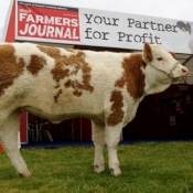 Plough 2009 Irish Farmers Journal Simmental Heifer