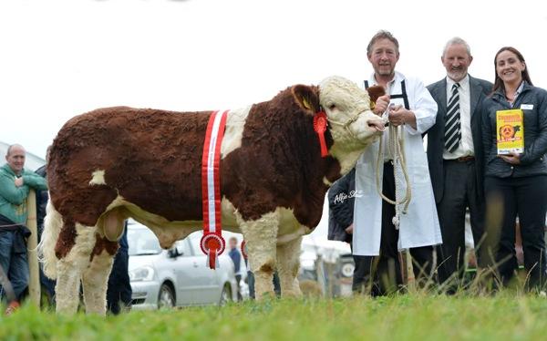 Norbrook Champion Bull 'Curaheen Dickens'