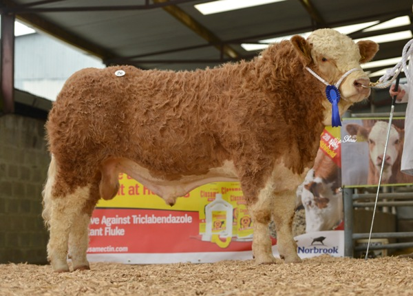 Bighill Excel €4400