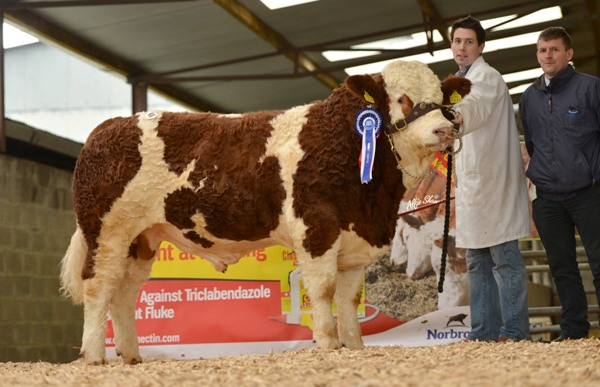 Reserve Junior Bull 'Bearna-Dhearg Edgar' €3700