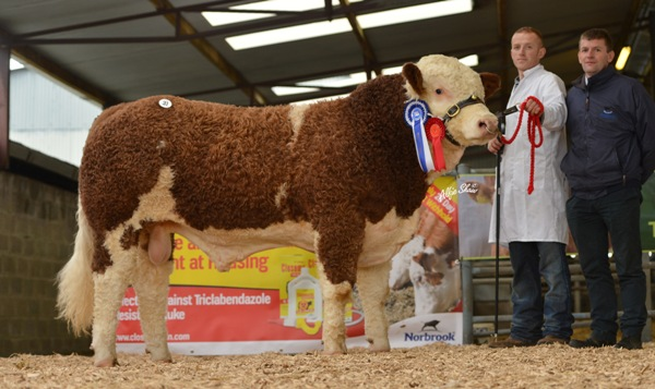 Reserve Senior Bull 'Bighill Eye Catcher' €3000