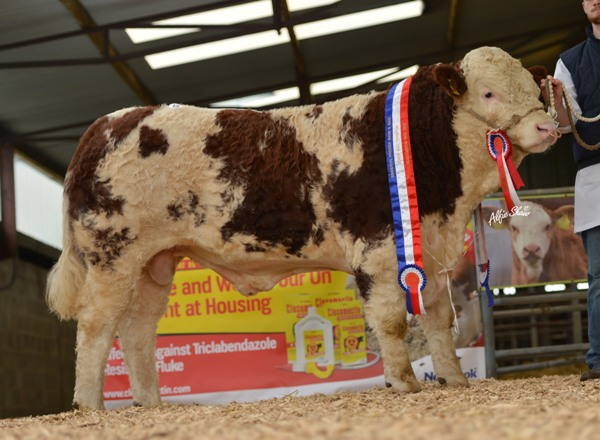 Senior Champion Bull 'Auroch Elvis' €4400