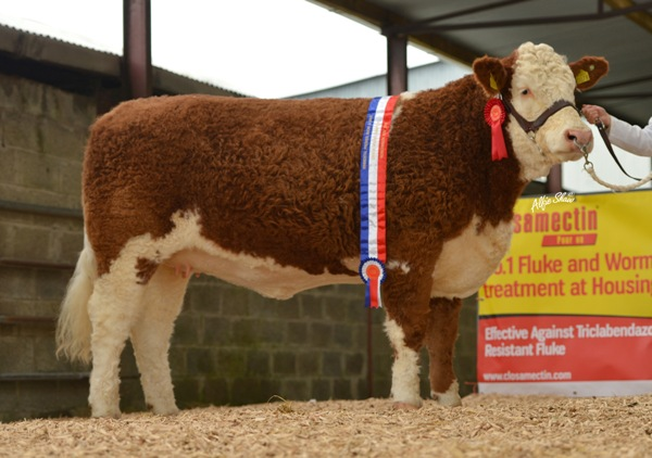 Senior Heifer Champion 'Seepa Daffodil' €8000