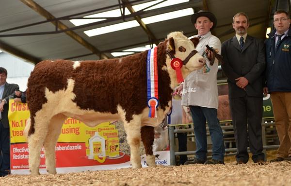 Weanling Heifer Champion 'Raceview Eureka Velvet' €5000