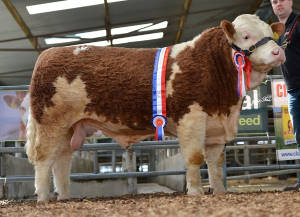 Junior Bull Champion 'Broomfield Elmo' €4500