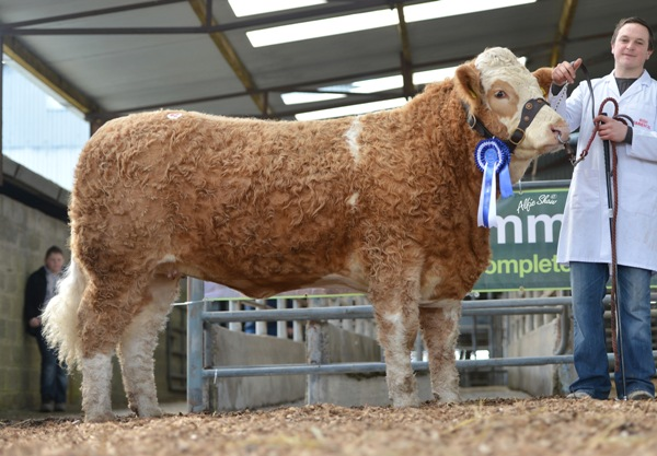 Reserve Female Champion 'Fearna Duchess' €5000