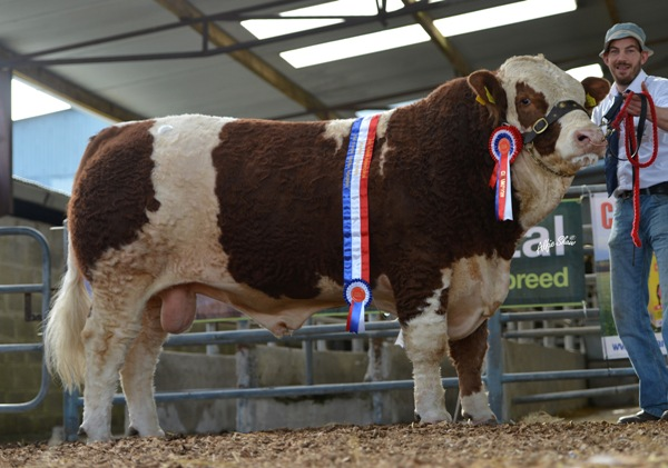 Senior Champion 'Clonagh Denis The Menace' €4800