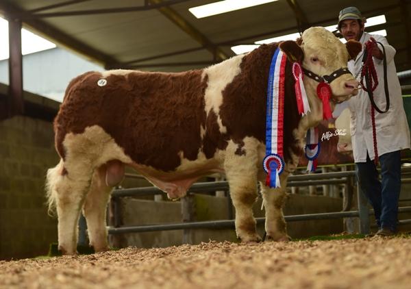 Junior Bull Champion 'Clonagh Hawk Eye ET' €7600