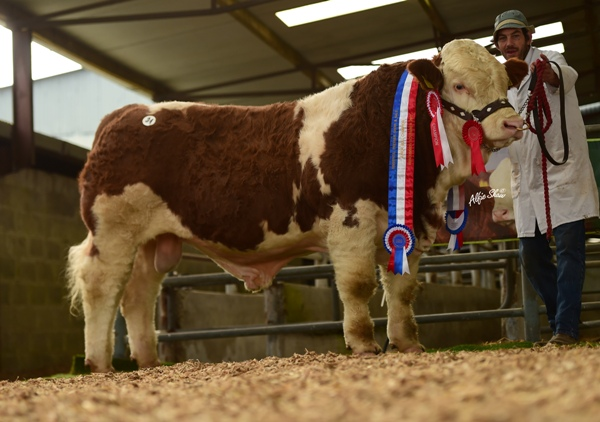 Junior Bull Champion 'Clonagh Hawk Eye ET' €7600