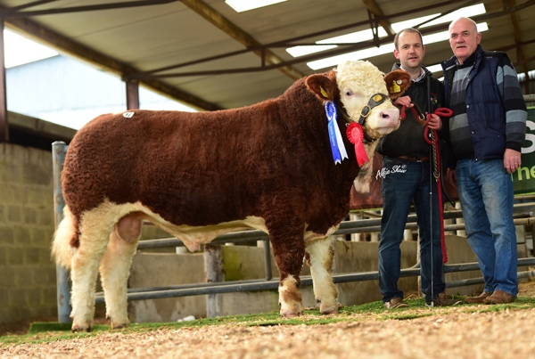 Junior Reserve Champion 'Bearna Dhearg Haka' €3700