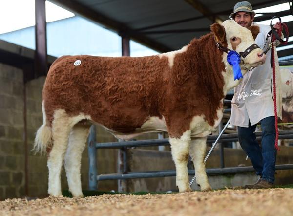 Reserve Weanling Heifer 'Jennalyn Jubilee Rose' €3900