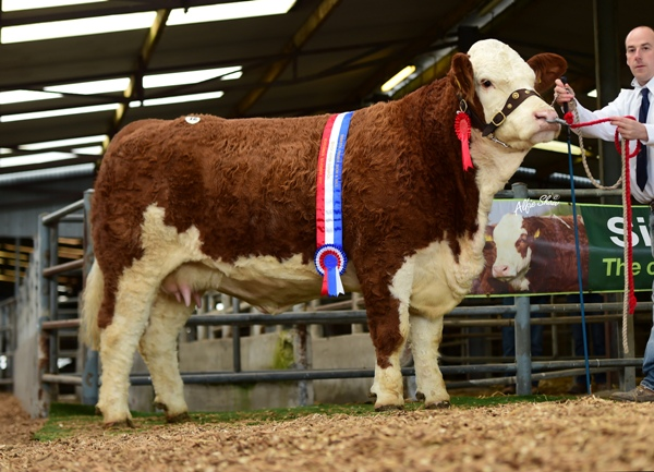 Senior Heifer Champion 'Tisaran Gemma May' €4800