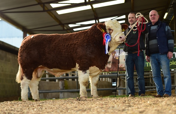 Senior Reserve Champion 'Bearna Dhearg Hugo' €3600