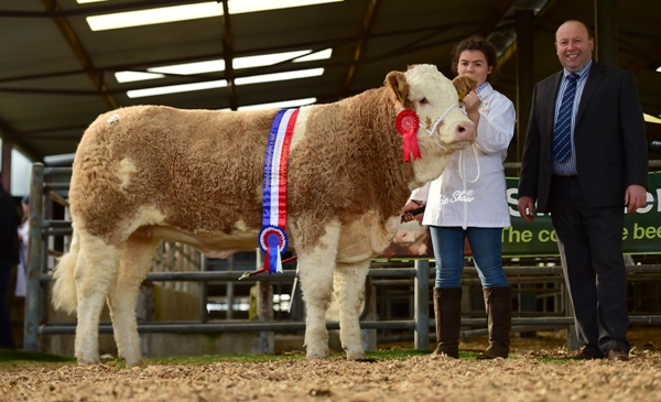 Weanling Heifer Champion 'Tawley Hanna' €10700