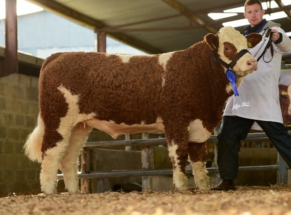 Reserve Weanling Heifer 'Clonguish Grace ET' €8200