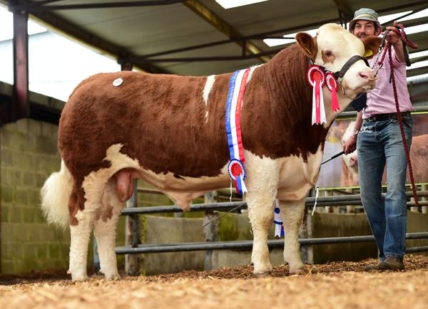 Junior Bull Champion Clonagh Just A Dream €12500