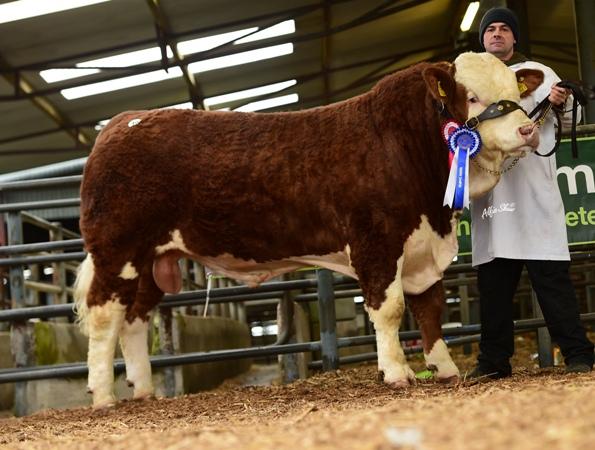 Reserve Junior Bull Firmount Jacob €2000