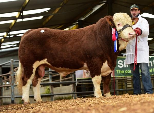 Reserve Senior Bull Bridgemount Harvey €2800