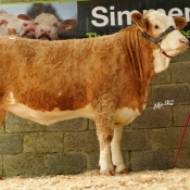 Lot 70 'Bridgemount Clona' €2600