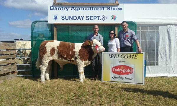 Bantry Show Southern Simmental Club Junior Bull Calf Champion 'Corbally Groover'