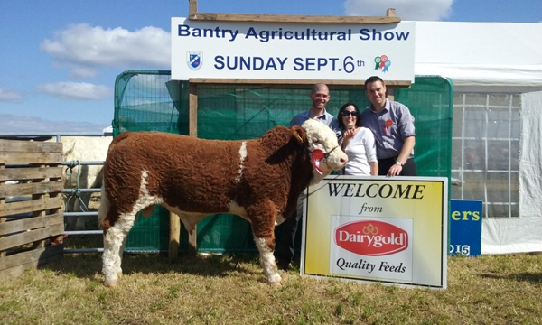 Bantry Show Southern Simmental Club Senior Bull Calf Champion 'Corbally Gino ET'