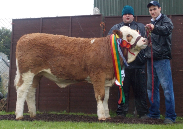 Barryroe Reserve & Weanling Heifer Champion 'Mohona Fancy'