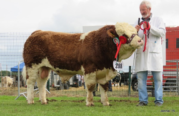 Limerick Male Champion & Reserve Overall Champion 'Towerhill Freaky Friday'