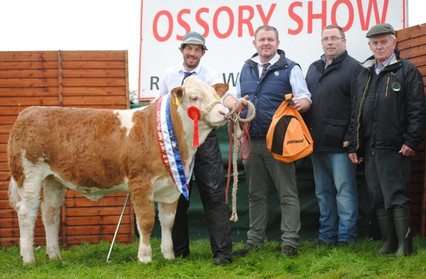 Ossory South Eastern Club Weanling Heifer Champion 'Jennalyn Fruity'