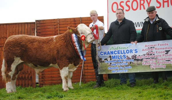 Ossory South Eastern Club Yearling Bull Champion 'Clonagh First Class'