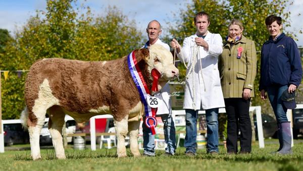 Strokestown National Junior Bull Champion 'Barnattin George'