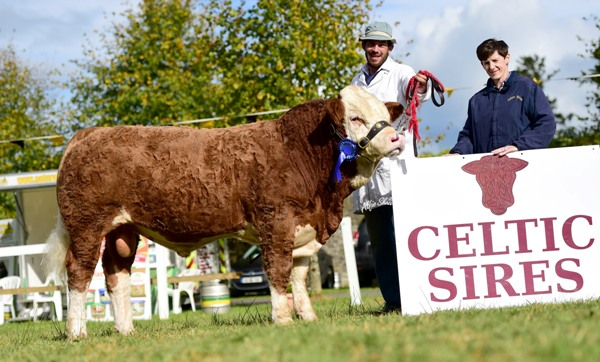 Strokestown National Senior Bull Reserve Champion 'Clonagh Foot Loose Willow'