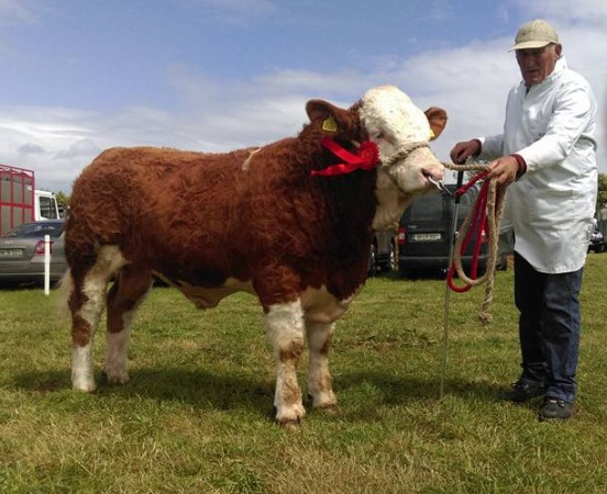 Tinahely Reserve Champion 'Jennalyn First Class'